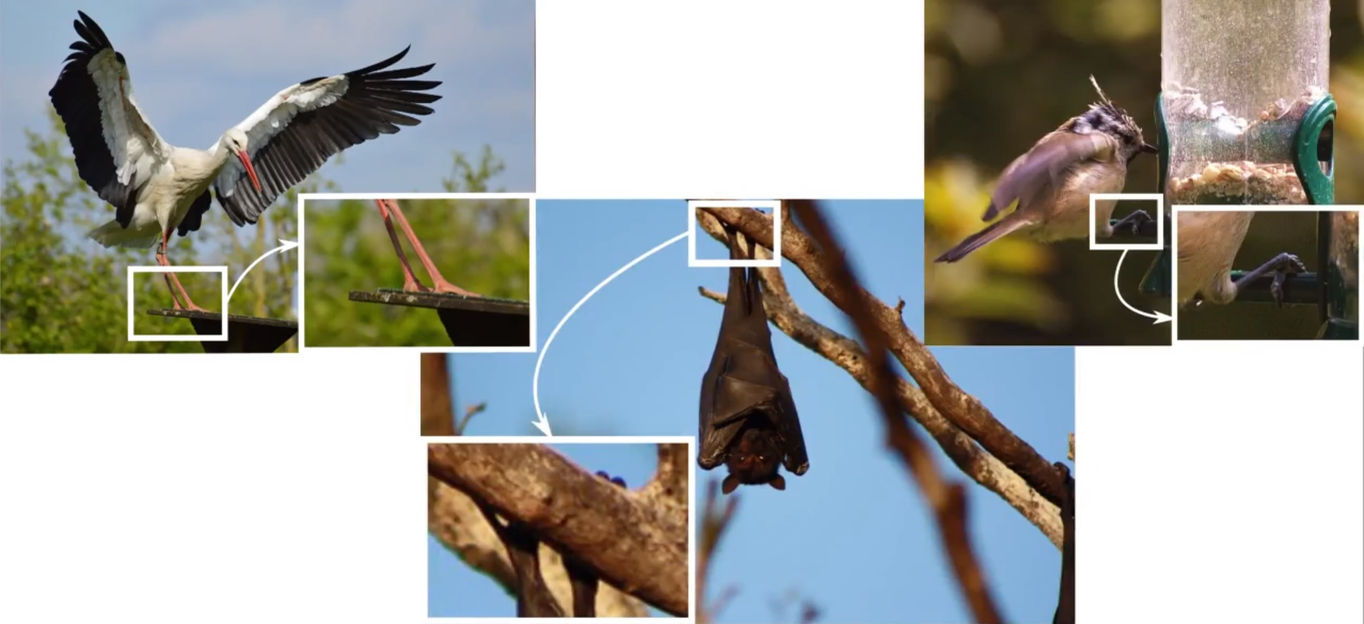 The Yale Research Group Looked To Way Birds And Bats Attach Themselves Objects In Order Develop A Frame That Lets Drones Land Previously